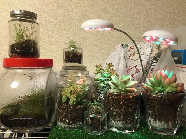 多肉植物 テラリウム 育成ライトを設置してみた